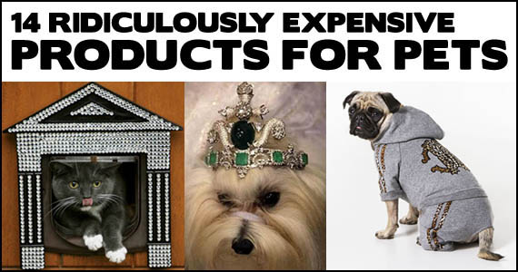 14 Ridiculously Expensive Pet Products