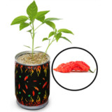 Grown Your Own World's Hottest Pepper