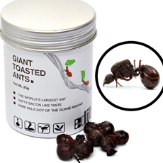 Edible Giant Toasted Ants