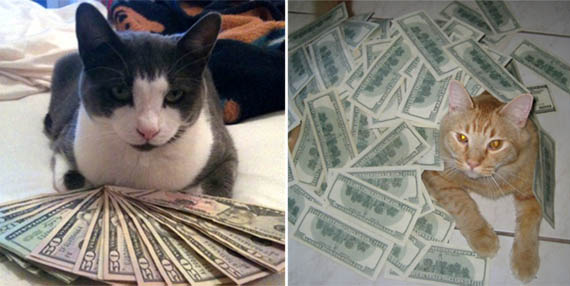 Check Out Real Fat Cats at CashCats.biz