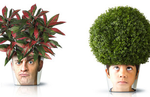 Forget Chia Pets, Now You Can Grow Plants in Your Own Head