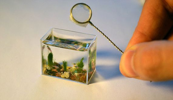 The World S Smallest Aquarium Makes Tiny Fish Feel Cramped