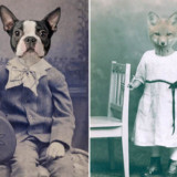 Animal Inspired Vintage Photography Collages