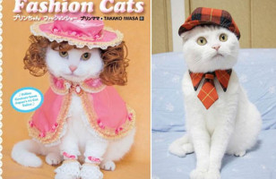 Fashion Cats Can Haz Frilly Dresses