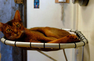 The Hammock Cat Bed Isn't A Pedestal, But It's Close