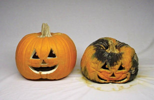 Keep Pumpkins From Turning Into Ghouls