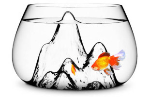 A Fishbowl That Makes You Want A Fish