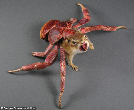 That Aint Right: Terrifying Mix & Matched Taxidermied Mutant Endangered Species