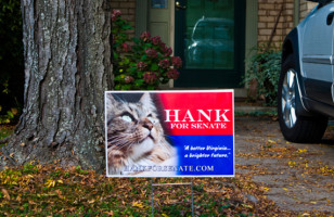 Hank The Cat 4 Senate
