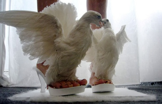WTF: Real Life Dove Shoes