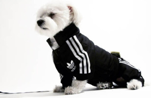 Adidas Track Suit For Your Pooch