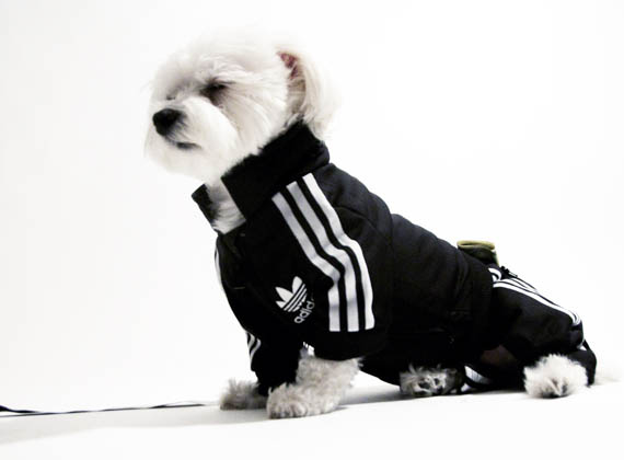Adidas Track Suit For Your Pooch Incredible Things