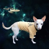 Star Trek Uniform For Dogs