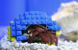 Harry The Hermit Crab With A LEGO Shell