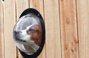 Pet Peek: Because Your Dogs Don't Bark Enough Already