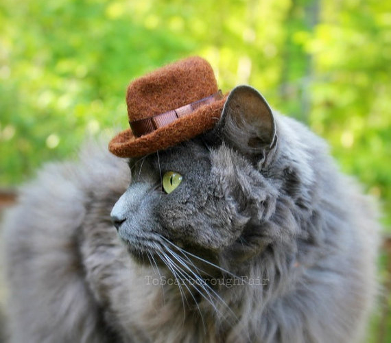 Dapper Cat Is Dapper: Fedoras For Kitties