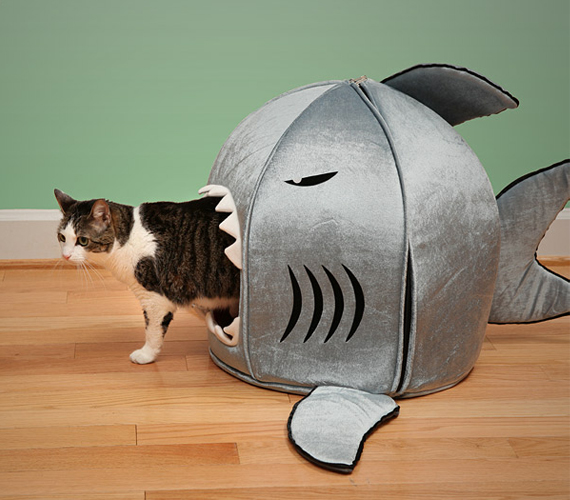 What's The Matter? Shark Got Your Cat?