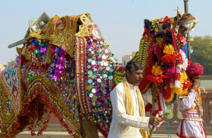 Camel Festival: Your Chance To Do The Hump