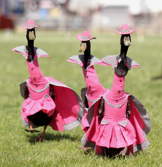 YES: Duck Fashion Show