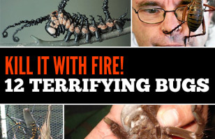 Kill It With Fire! 12 Terrifying Bugs