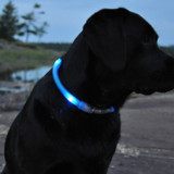 Glowdoggie Collar