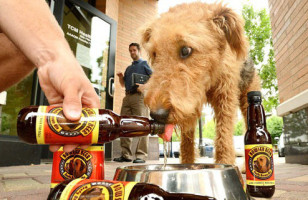 For Party Animals: Beer For Dogs