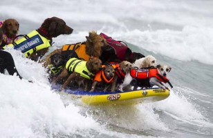 Surf's Pup!: Dog Surfing Competition