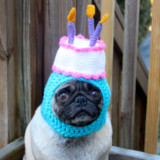 Hilarious Knit Dog Hats