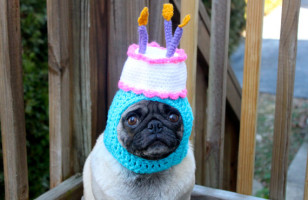 Ridiculous Knit Hats For Your Dog