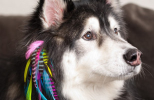 Puppy Locks: Hair Feathers For Your Dog