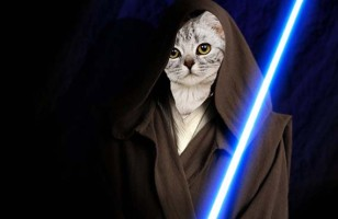 Star Wars Scenes Recreated With Cats