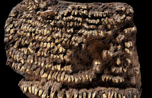 Dog Teeth Studded Purse Is World's Oldest