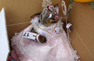 LOLWUT: Best Dressed Possum Competition
