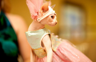 Cat Lady's Dream: The Cat Fashion Show
