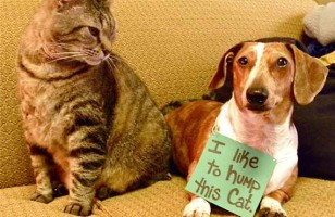 Dog Shaming: A New Internet Trend
