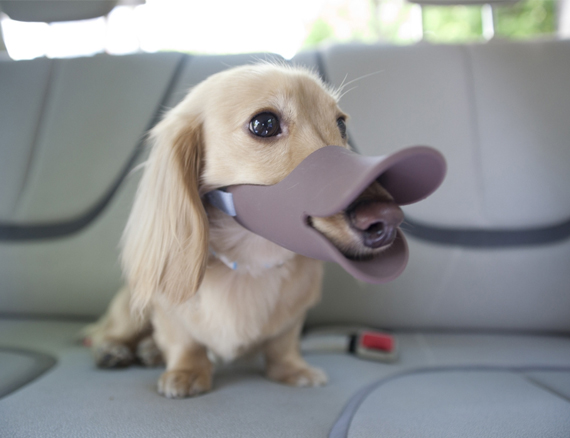 Great, Even Dogs Are Making the Duckface