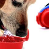 Ruff Bowl - Portable Water Bowl for Dogs