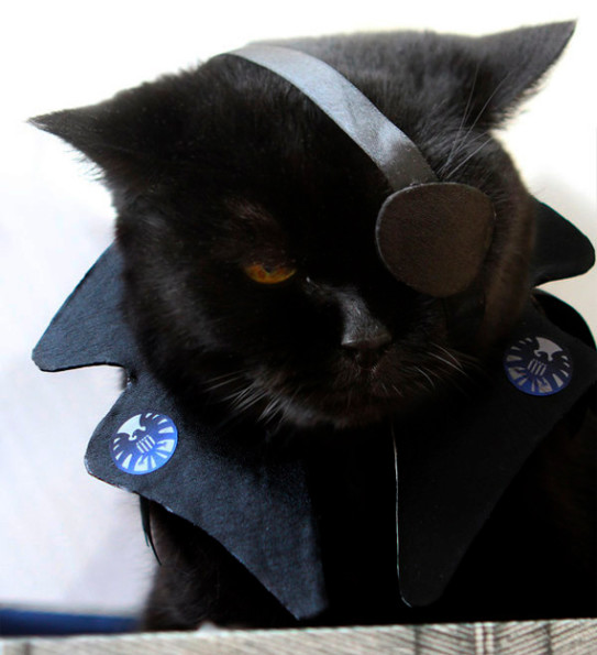 What Do You Call A Cat Dressed Like Nick Fury?