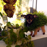 Chia Pet Costume For Your Dog