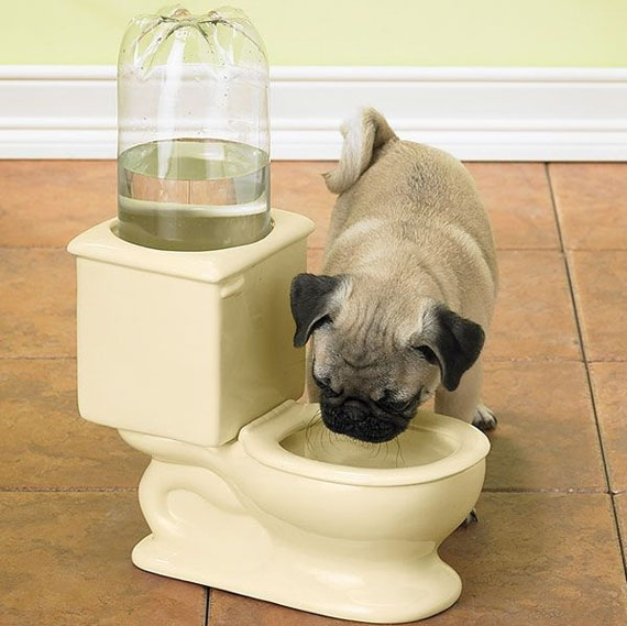 I Guess?: A Toilet Water Bowl For Pets