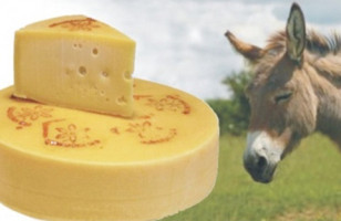 Most Expensive Cheese, Made With Donkey Milk