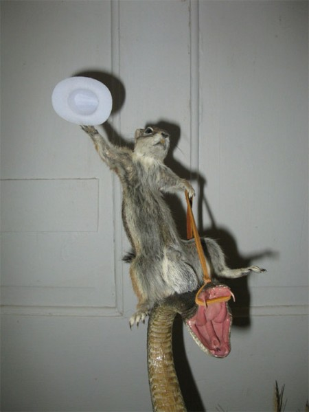 WTF: Taxidermy Squirrel Riding Rattlesnake