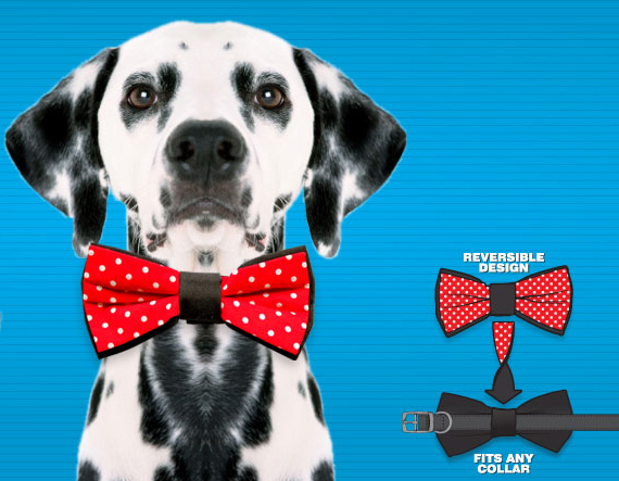 Bow Ties Turn Mutts & Furballs Into Gentlemen