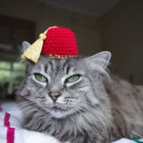 Crocheted Cat Hats