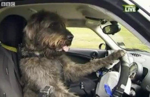 LOLWUT?: Driving School For Dogs