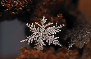 Snow Flakes, Up Close & Personal