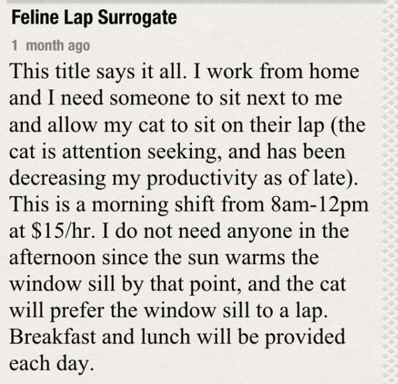 Help Wanted: Feline Lap Surrogate
