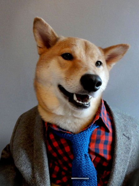 The Most Fashionable Dog You Ever Seen