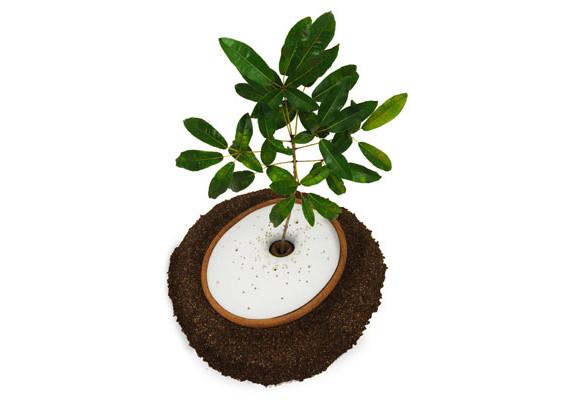 Treeincarnation: Die & Become A Tree