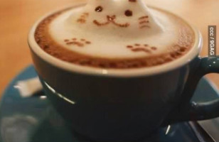 Purrfect 3D Latte Art